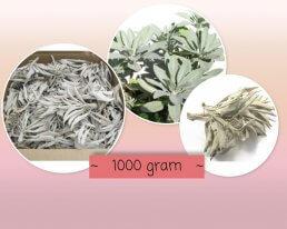 witte salie 1000 gram ~ geurhout.nl