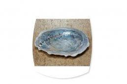 abalone schelp klein ~ Geurhout.nl